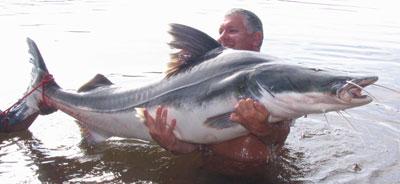 vette vissoorten
