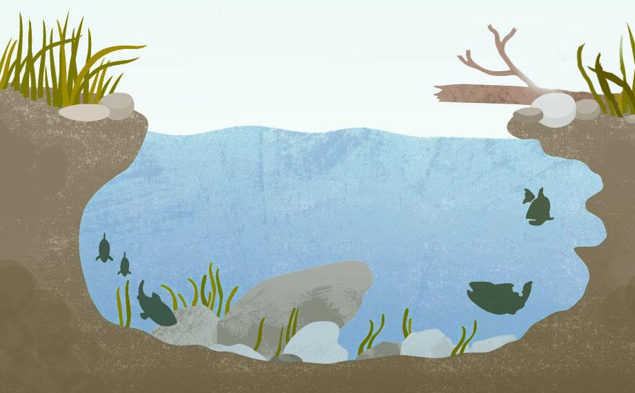 vissen afbeeldingen onder water